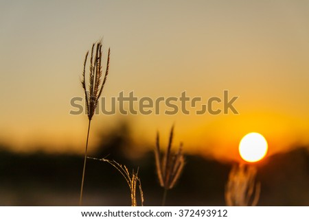 Sunset with silhouette flowers