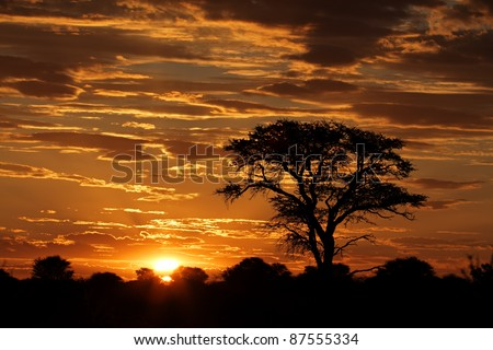 Sunset with silhouetted African Acacia tree and clouds, Kalahari desert, South Africa