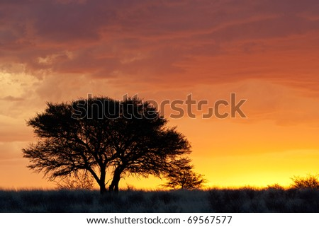 Sunset with silhouetted African Acacia tree, Kalahari desert, South Africa - stock photo
