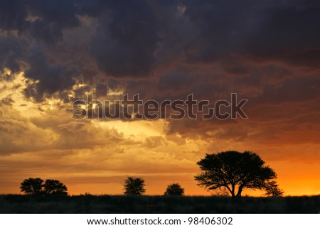 Sunset with silhouetted African Acacia trees, Kalahari desert, South Africa - stock photo