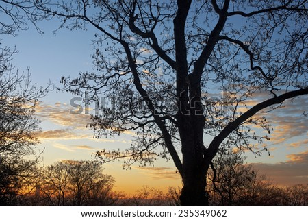 Sunset with trees, silhuette