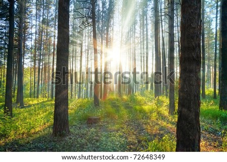 sunset woods - stock photo