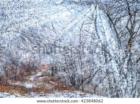 Sunshine among branches covered with frost. - stock photo