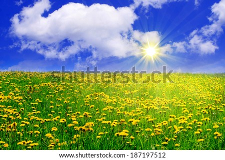 Sunshine and and flower meadow.