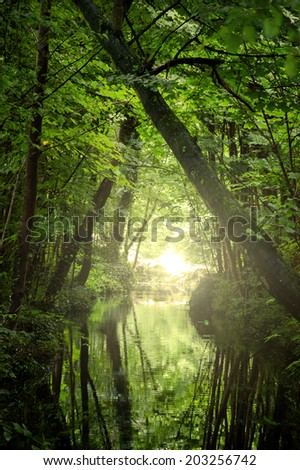 Sunshine glow through the woods and on the creek surface. Haze. Nature background. - stock photo