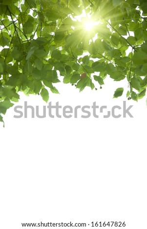 sunshine go through from the green leaf - stock photo