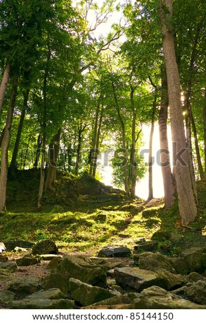 Sunshine in a forest. - stock photo