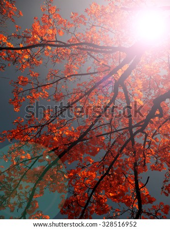 Sunshine in colorful branches - stock photo