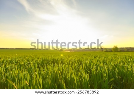 Sunshine in the forest at spring with trees - stock photo