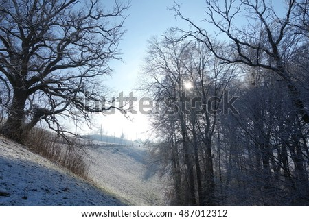 Sunshine in winter