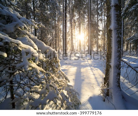 Sunshine in winter forest - stock photo