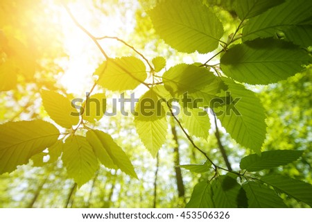 Sunshine on leaves in green forest