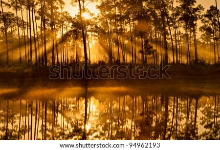 Sunshine through the pines at Long Pine Key Lake in Everglades National Park - stock photo