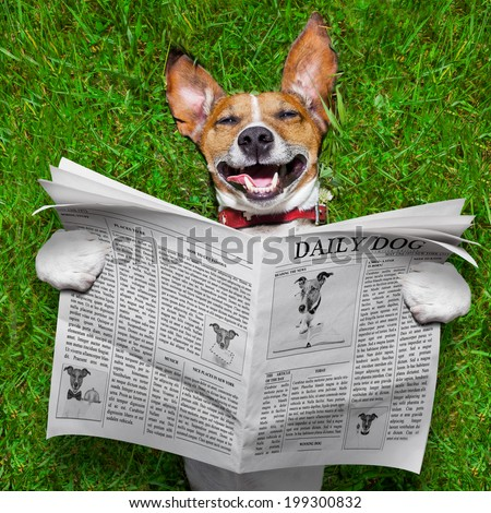 super funny face dog lying on back on green grass , reading gossip - stock photo