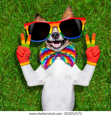 super funny face gay dog lying on back with peace or victory fingers showing pride - stock photo