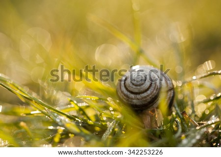 Super macro photo of snail in wet grass. Small depth of field photo - stock photo