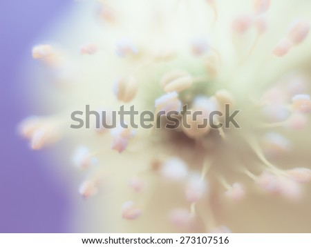 Super macro shot of yellow flower, soft focus, defocused floral background - stock photo