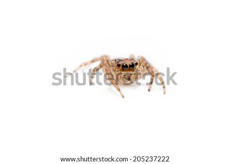 Super macro spider portrait - stock photo