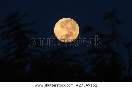 Super Moon With Trees As a Foreground (Space For Text Below)
