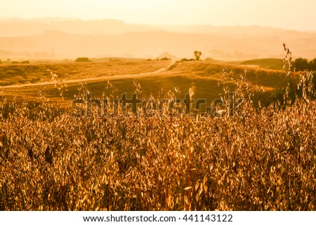 superb sunset over the hills of Tuscany's wheat fields and roads lined with cypress trees in the lands in the province of Siena - stock photo