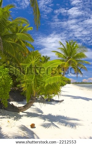 Superior palmtrees on the beach in Indian Ocean, Maldive island, Gan