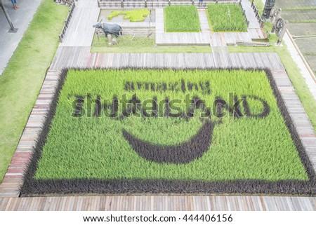 Suphanburi,Thailand - Jun 25 2016 : open rice Farm Here Chai Riceseed at Suphan Buri ,Thailand  - stock photo