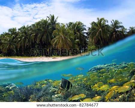 Surface and underwater view of a tropical beach with coconut palm trees and school of fish in a coral reef, Caribbean sea, Panama - stock photo