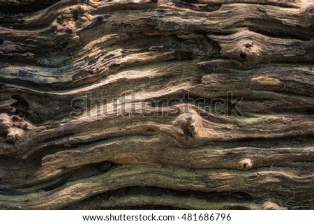 Surface bark wood wave pattern