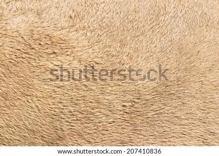 Surface camel hair - stock photo