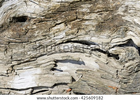 surface of old tree background - stock photo