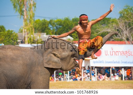 SURIN, ISAN, THAILAND - NOVEMBER 20, 2010: A trainer sits on an elephant trunk during an elephant trick performance at the annual Surin Elephant Roundup on November 20, 2010 in Surin, Thailand - stock photo