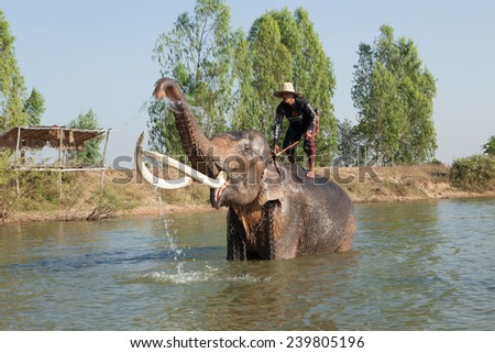 SURIN, THAILAND - December 20: mahout riding his elephant in pool to bathing.2013. - stock photo