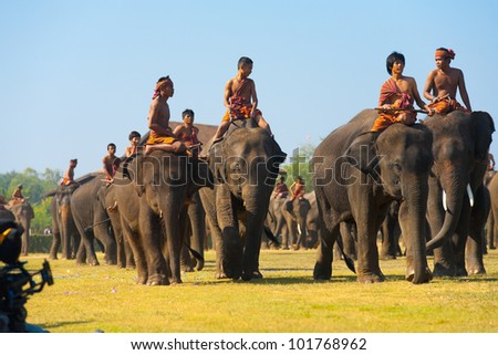 SURIN, THAILAND - NOVEMBER 20, 2010: A large group of elephants and trainers walk on the main perofrmance field at the annual Surin Elephant Roundup on November 20, 2010 in Surin, Thailand - stock photo