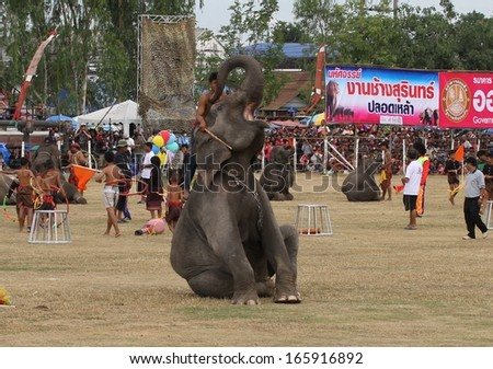 SURIN, THAILAND - NOVEMBER 16: Mahouts and elephants taking part in a circus display for the Elephant Roundup Festival held in Surin, Thailand on the 16th November, 2013.