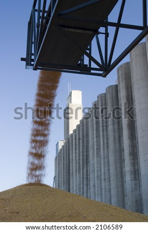 surplus corn at a grain elevator being piled up on the ground - stock photo
