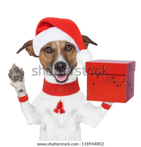 surprise christmas dog with a present red box - stock photo