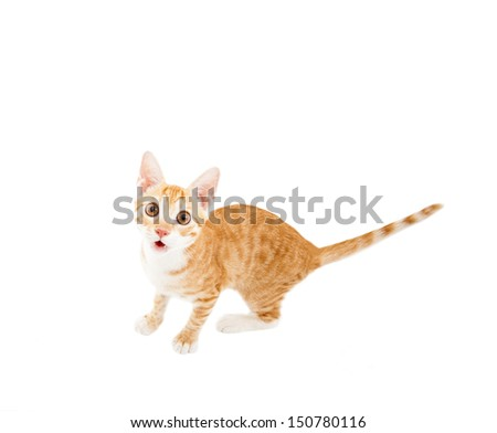 surprised cat looking at camera - stock photo