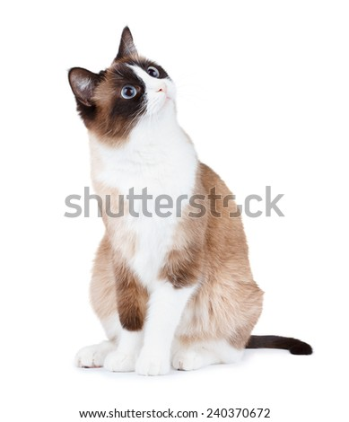 Surprised cat looking right up corner, isolated on white - stock photo