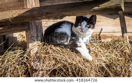 Surprised kitten sits on the Seine on a Sunny day. - stock photo
