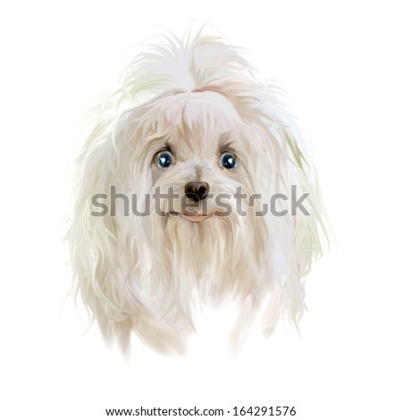 Surprised puppy. Drawing puppy. - stock photo