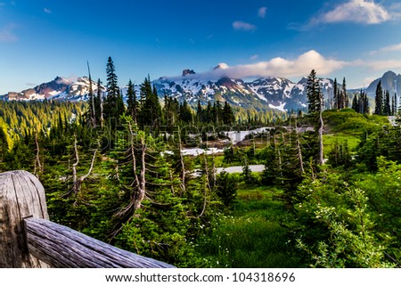 Surreal Alpine Meadow at Paradise on Mount Rainier in August 2011. - stock photo