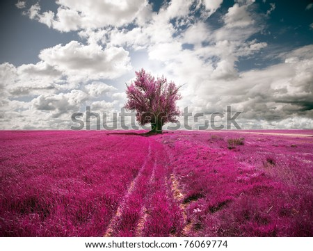 surreal  landscape fields and tree - stock photo