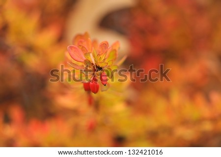 Surreal nature background - Orange-red autumn shrubs with berries and  motley artistic bokeh blur. - stock photo