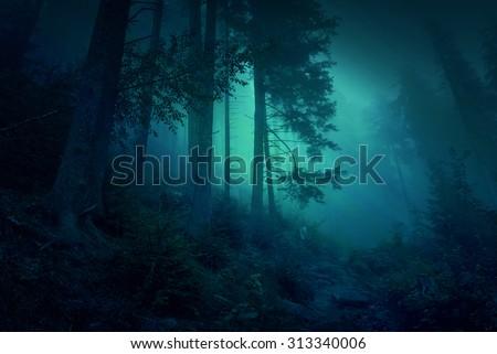 Surreal night forest scene: illustration - stock photo