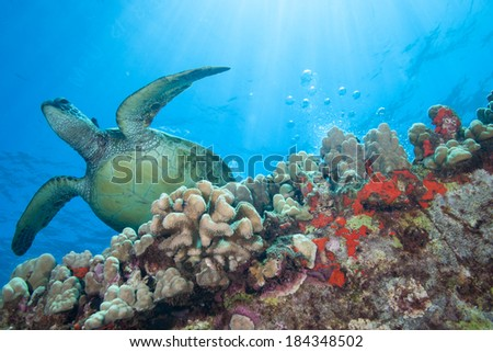 Surreal underwater image of a sea turtle bathed in sun rays - stock photo