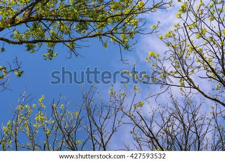 Surrounded by trees, looking at the blue sky low angle. - stock photo