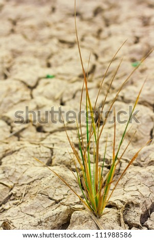 Survive small plant in dry brown soil - stock photo