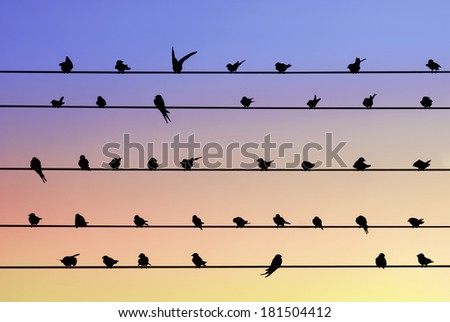 Swallow birds sitting on electrical wires and sunset sky - stock photo