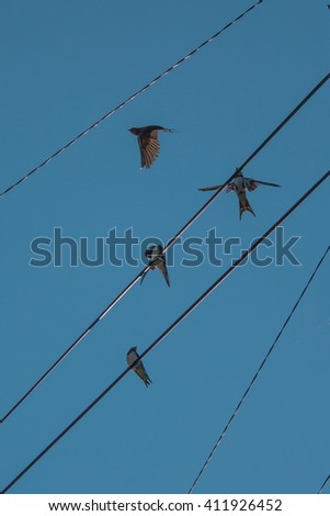 swallows in the sky on power lines - stock photo