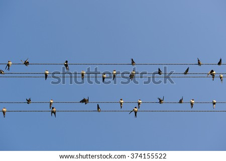 Swallows on Power Lines